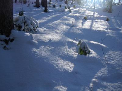 新雪の馬追山