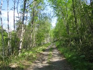 ニニウの森の山道