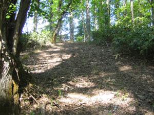 笹がつんつんと出ている山道