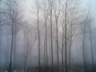 霧の防風林