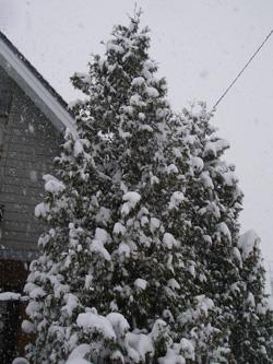 真っ白な木