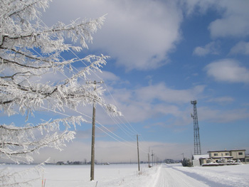 冷えた朝の農道