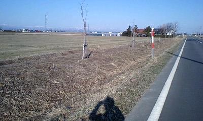朝RUNの農道
