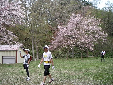馬追温泉の桜