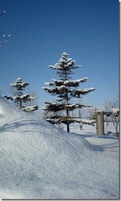 季節はずれのクリスマスツリー
