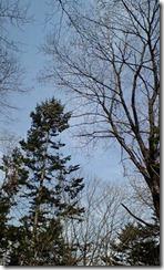 長官山の木々